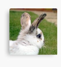cute baby rabbit Canvas Print