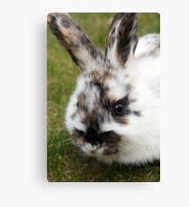 cutie bunny in the garden  dawarf lop  Canvas Print