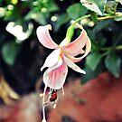Hang on Ladybug by Glenna Walker