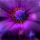 Flower Chakra by Vasile Stan