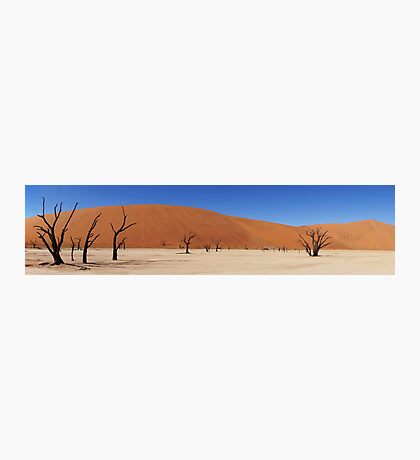 Dead Forest Photographic Print