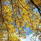 Texture of autumn by Catherine Davis