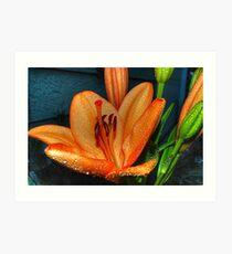 Outstanding Orange Lily Art Print