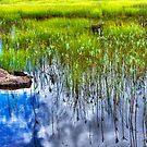 Marsh Reflections by CarrieAnn