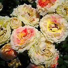 Amazing Roses # 7. by Vitta