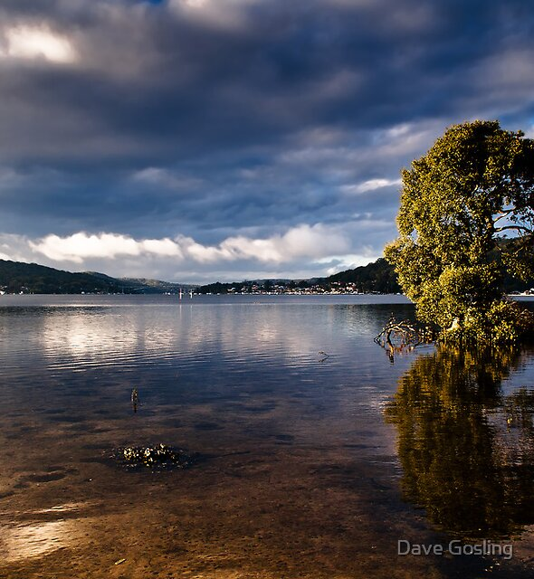 Morning Tree by Dave  Gosling Photography