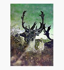 Ridiculously Photogenic Deer Photographic Print