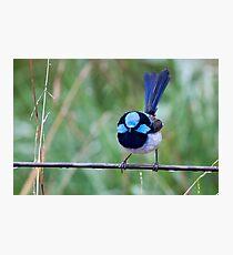 A Little Magic Blue Photographic Print