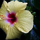 Yellow Hibiscus by Astrid Ewing Photography