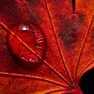 Rainy Day Red by Barb Leopold