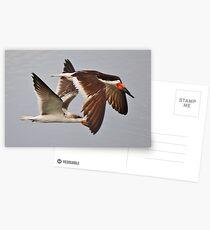 Skimmers Postcards