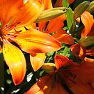 Orange frenzie! by Marie-Eve Boisclair