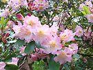 Rhododendron Flowers Garden art prints Floral by BasleeArtPrints