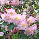 Rhododendron Flowers Garden art prints Floral by BasleeArtPrints