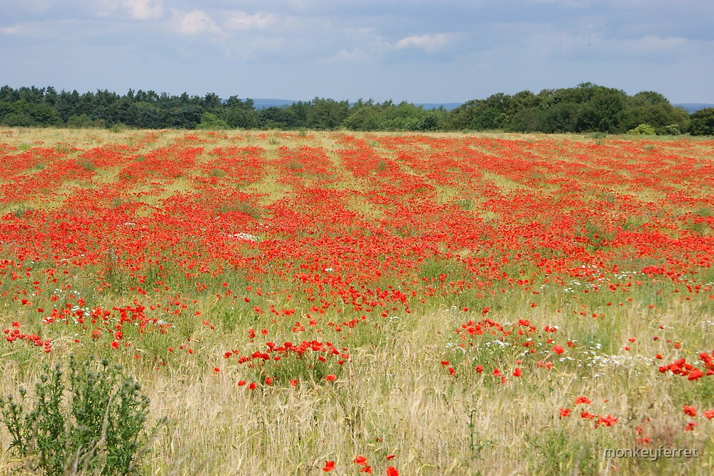 swathes of red - poppy field, North Yorkshire by monkeyferret