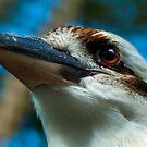 Kookaburra Detail by Damienne Bingham