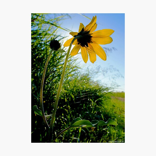 Good Morning Sunshine ! Photographic Print