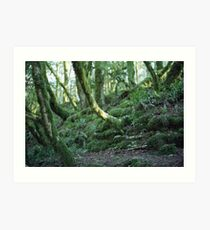 Mysterious forest in Sochi, Russia Art Print