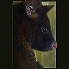 I've been framed....... by Josie Jackson