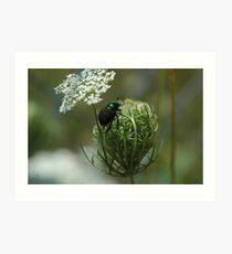 Beetled Green Art Print