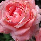 Amazing Roses # 10. by Vitta
