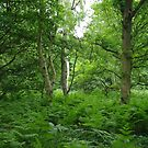 Woodland is sexy in Surrey by tim norman