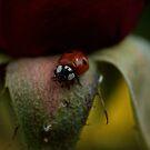 Lady Bug by Valerie Henry