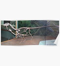 Funky Coelophysis Poster