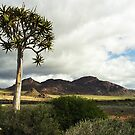 Quiver (Kokerboom) Tree - Augrabies NP by Bev Pascoe
