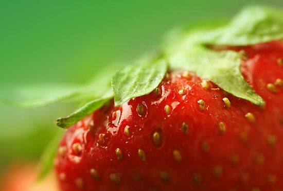 Sweet Summer Strawberry by Caterpillar
