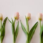 Four Tulips by Bethany Helzer