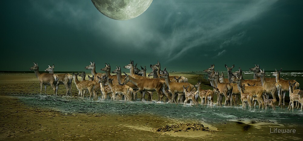 Deer on holiday by Lifeware