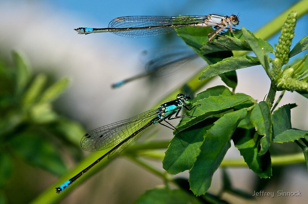 Winged beauties by Jeffrey  Sinnock