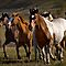 Horses Running!