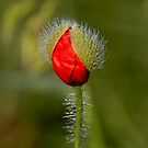 Under the morning dew by Gouzelka