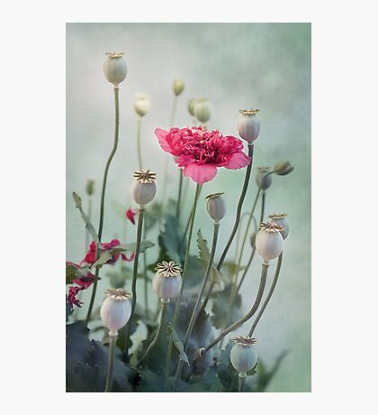 Pods, Buds and Flowers Photographic Print