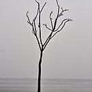 Like a Twig by hmx23