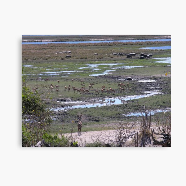 Chobe overview Canvas Print