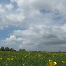 Buttercups ( June 2011) by fatchickengirl