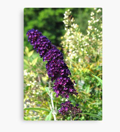 Purple and Orange Flowers, North Carolina Canvas Print