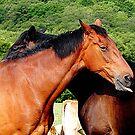 HorseN Around by © Loree McComb
