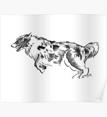 Australian Shepherd Drawing Poster