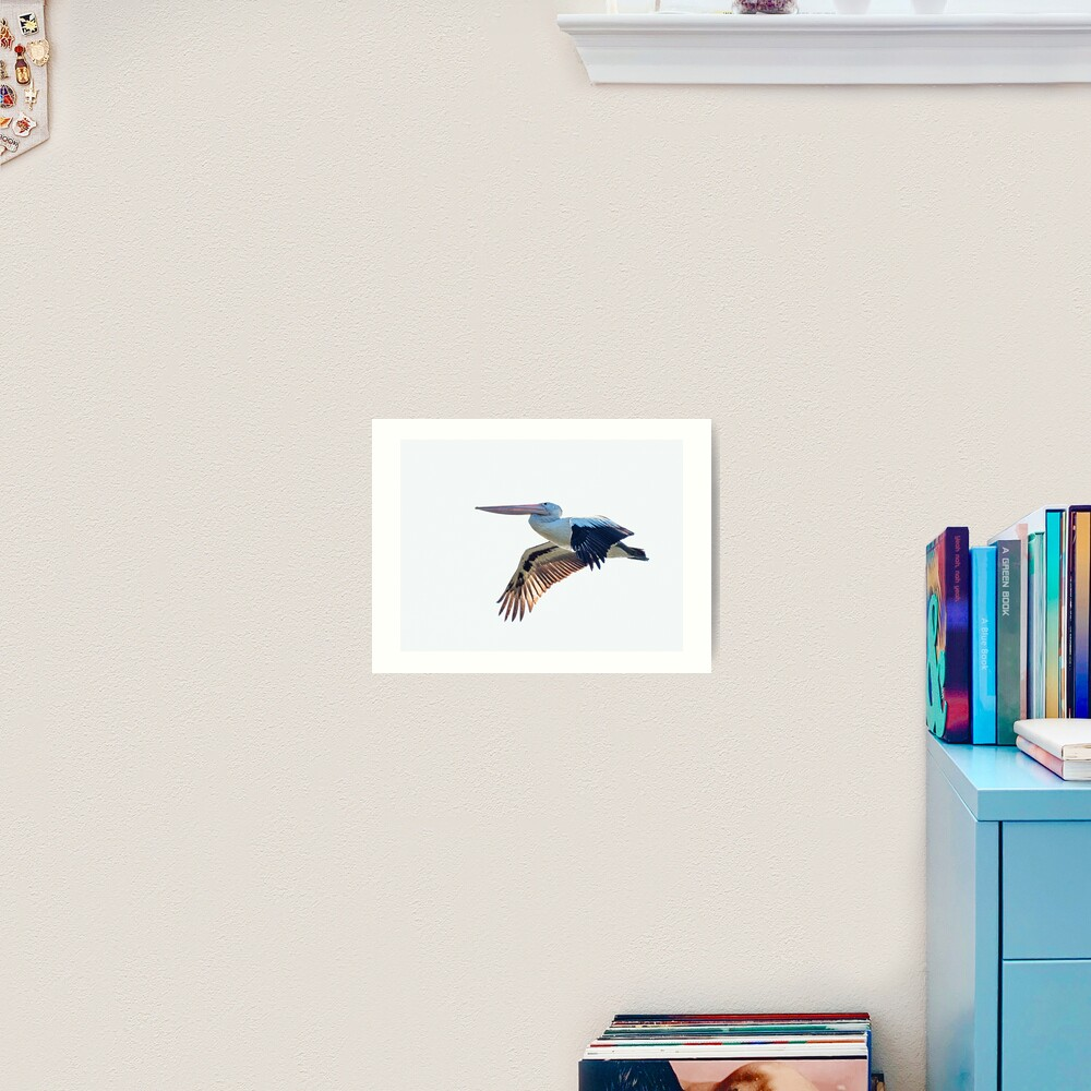 Australian Pelican Art Print