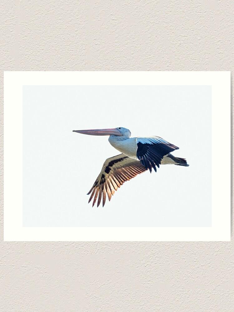 Alternate view of Australian Pelican Art Print