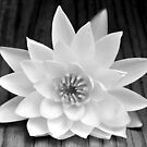 Water Lily on Wood by Gayle Dolinger