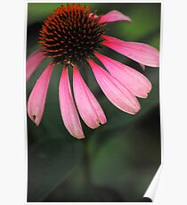 Spike Me Up With Echinacea 2 Poster