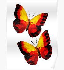 Farfalle Poster