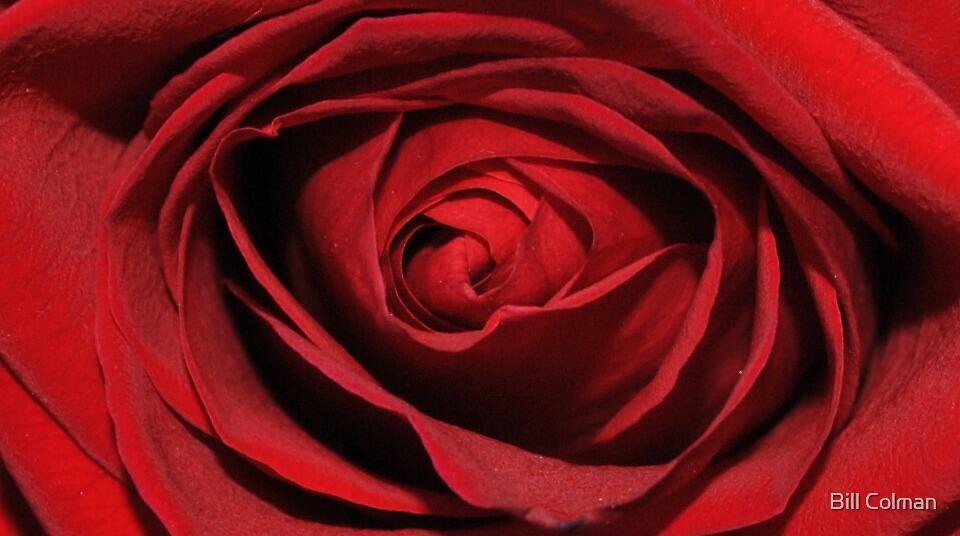 Inside the Rose by Bill Colman