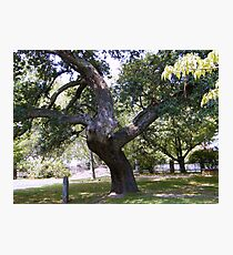 Crooked Tree Photographic Print