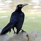 Black Bird by SuddenJim
